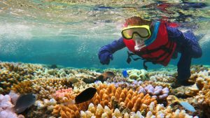 Great Barrier Reef in the Tropical North Queensland vacation