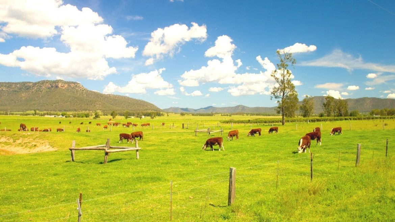 natural landscape at Hunter Valley Asia Vacation Group