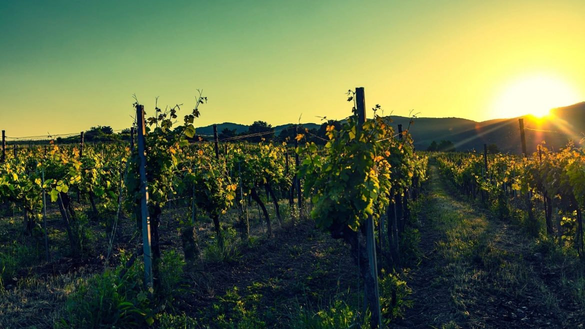vineyard in Hunter Valley Asia Vacation Group